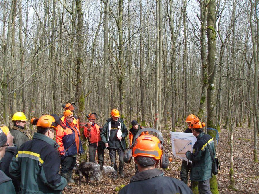 Waldbautraining im Eichenwald <br/>Foto: Forstamt Main-Tauber
