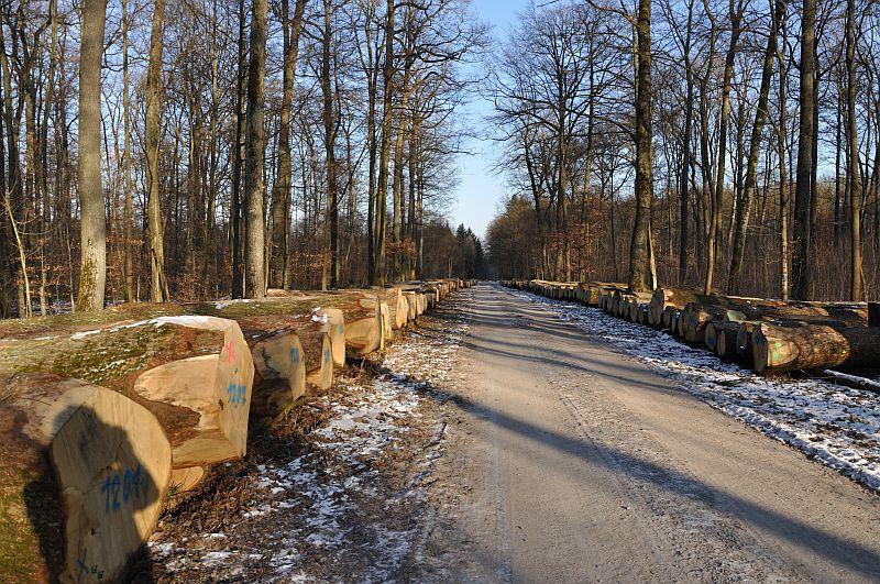 Foto: Forstamt Main-Tauber