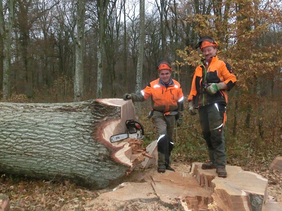 Der dickste und teuerste Stamm beim Wertholzverkauf war eine Furniereiche aus dem Stadtwald Külsheim. Foto: Forstamt Main-Tauber