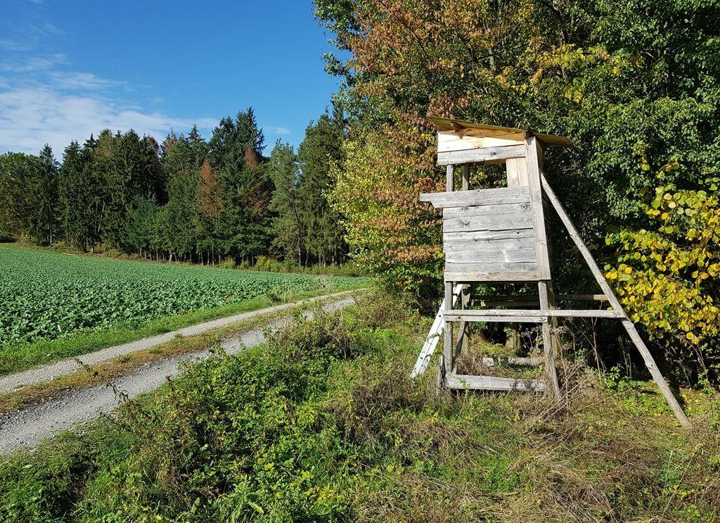 Wertheim gilt als waldreiche Stadt: 36 Prozent der Gemarkung sind mit Wald bewachsen. Foto: Stadt Wertheim