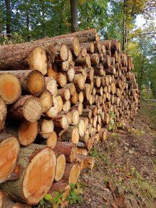 Im Stadtwald werden weniger Bäume gefällt als gepflanzt und aufgezüchtet - der Wald wächst. Foto: Stadt Wertheim