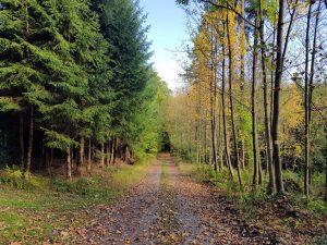 Eine Stärke des Wertheimer Waldes ist seine Vielfalt an Baumarten. Das macht ihn weniger anfällig für Dürreschäden. Foto: Stadt Wertheim