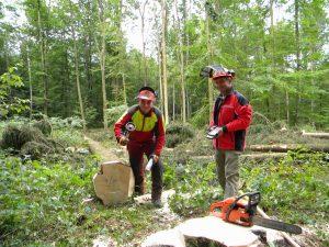 Ab Januar 2020 gibt es Änderungen bei der Privatwaldbetreuung.<br/>Foto: Forstamt Main-Tauber
