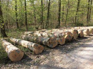 Eingeschlagenes Buchenstammholz: Die Holzverkaufsstelle des Landratsamtes Main-Tauber-Kreis gibt Empfehlungen für die beginnende Einschlagssaison. Foto: Forstamt Main-Tauber
