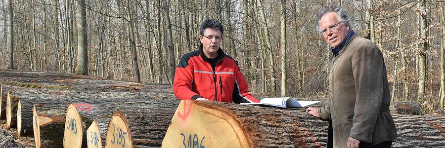 Landrat Reinhard Frank (links) verschaffte sich zusammen mit Uwe Renk von der Holzverkaufsstelle des Landratsamtes Main-Tauber-Kreis einen Eindruck vom diesjährigen Holzverkauf. Die Stämme liegen in Reihe und Glied auf dem Submissionsplatz auf dem Roggenberg in Bad Mergentheim. Foto: Forstamt Main-Tauber